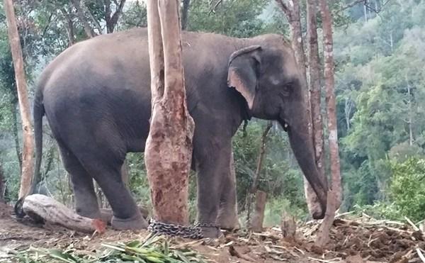 Wenn dir beim Wandern ein Elefant begegnet...
