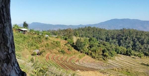 Aussicht von der Bambus-Berghütte