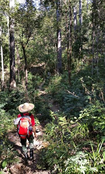 Wanderweg im Norden von Thailand