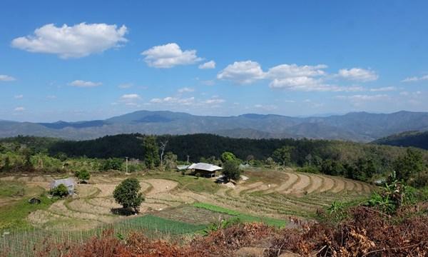 Trekking im Norden von Thailand: Wandern bei Bambus, Reis und Elefanten