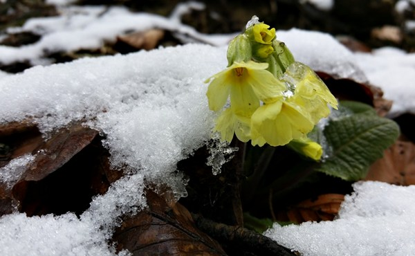 Winter und Frühling im Chiemgau