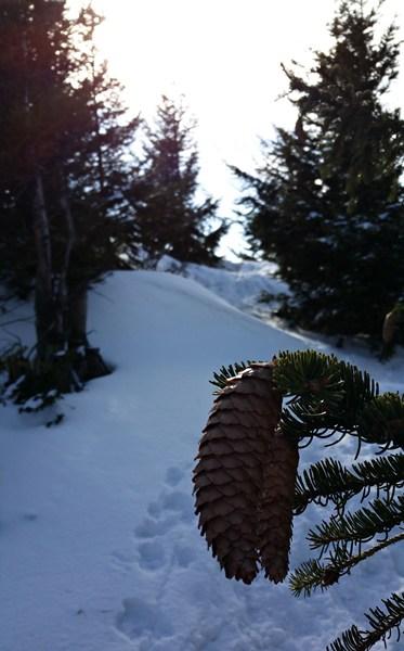 Weg zur Hochplatte im Schnee