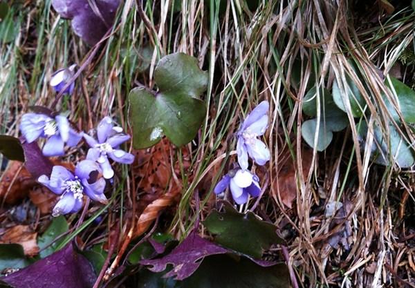Erste Anzeichen von Frühling