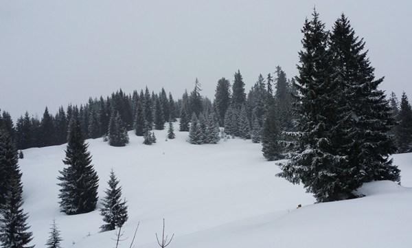Schneeschuhwanderung auf die Hörndlalm
