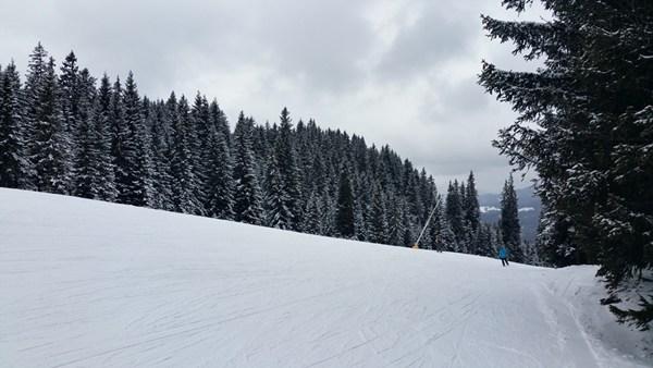 tannen im skigebiet lofer