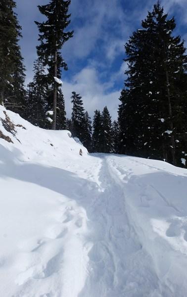 Leutasch Schneeschuhwandern