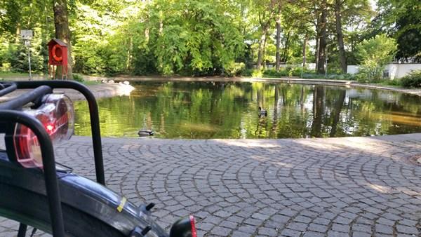 Der Tümpel im Hirschgarten