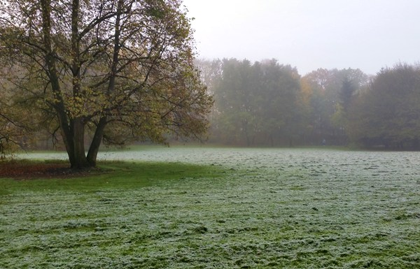 Hirschgarten an einem frostigen Herbst-Morgen
