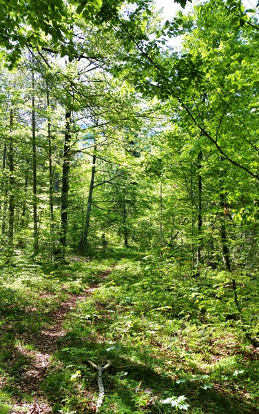 Waldweg im Dreiseengebiet