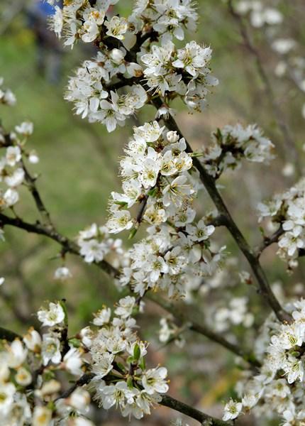 Mehr Frühling!