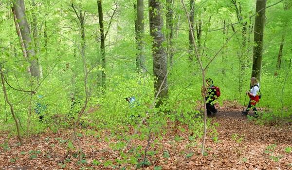 Hellgrün ist die Farbe im Frühlingswald