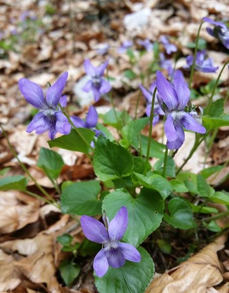 Frühlingsanzeichen am Rauschberg