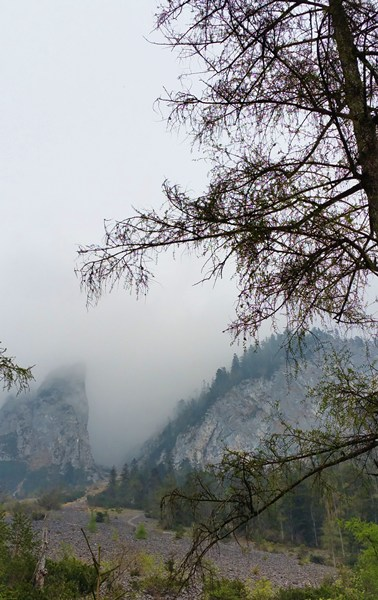 Nebel unterhalb des Rauschbergs