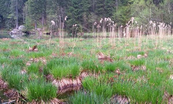 Chiemgauer Taubensee im Frühling