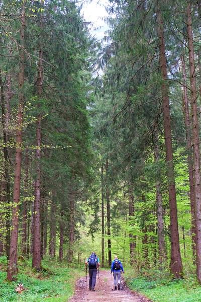 Chiemgauer Bergwald im Frühling