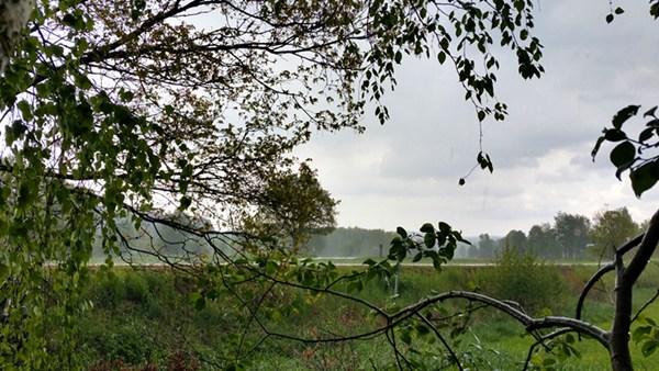 ...und wir warten unter Frühlings-Bäumen auf das Ende des Schauers.