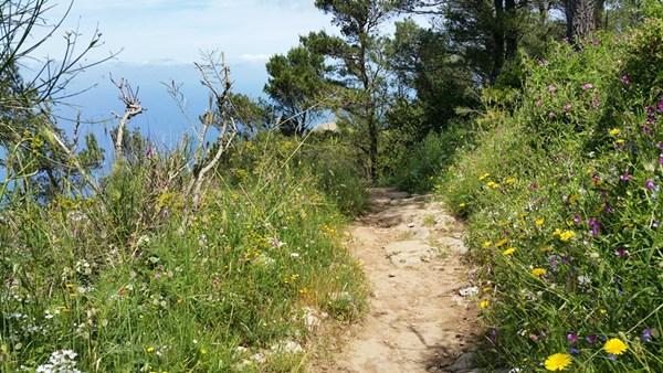 Wanderweg auf der Insel Capri