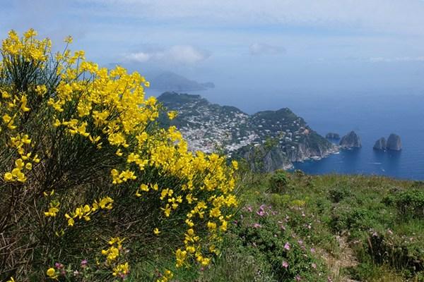 Capri im Frühsommer