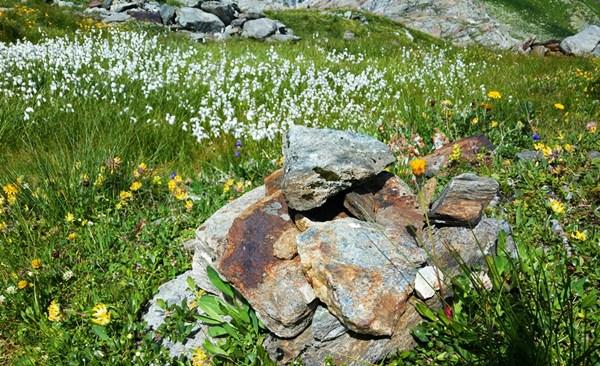 Felsen und Blumenwiese, bei der Gletscherwanderung in Osttirol