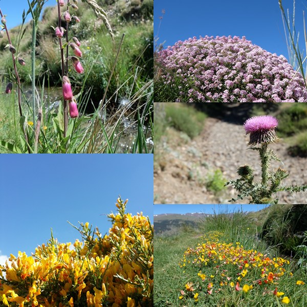 Blumen in der Sierra Nevada
