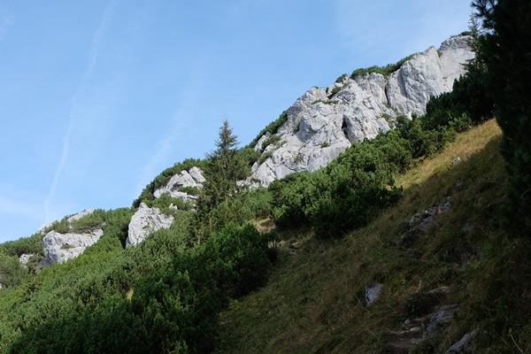 Latschenwald im Herbst
