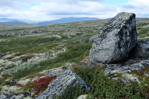 Olavsweg im Dovrefjell