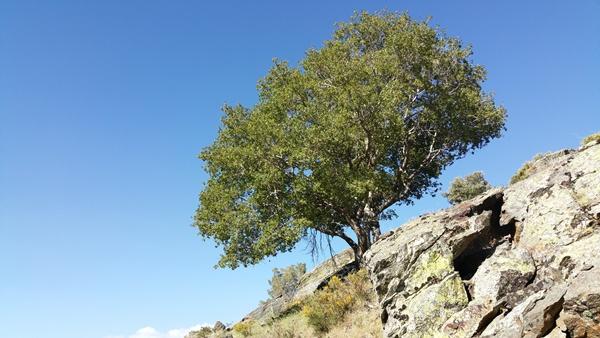 In der Sierra Nevada