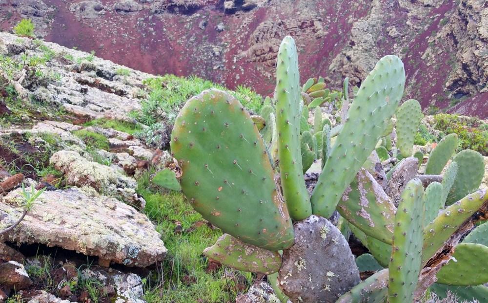 Kaktus am Wegesrand