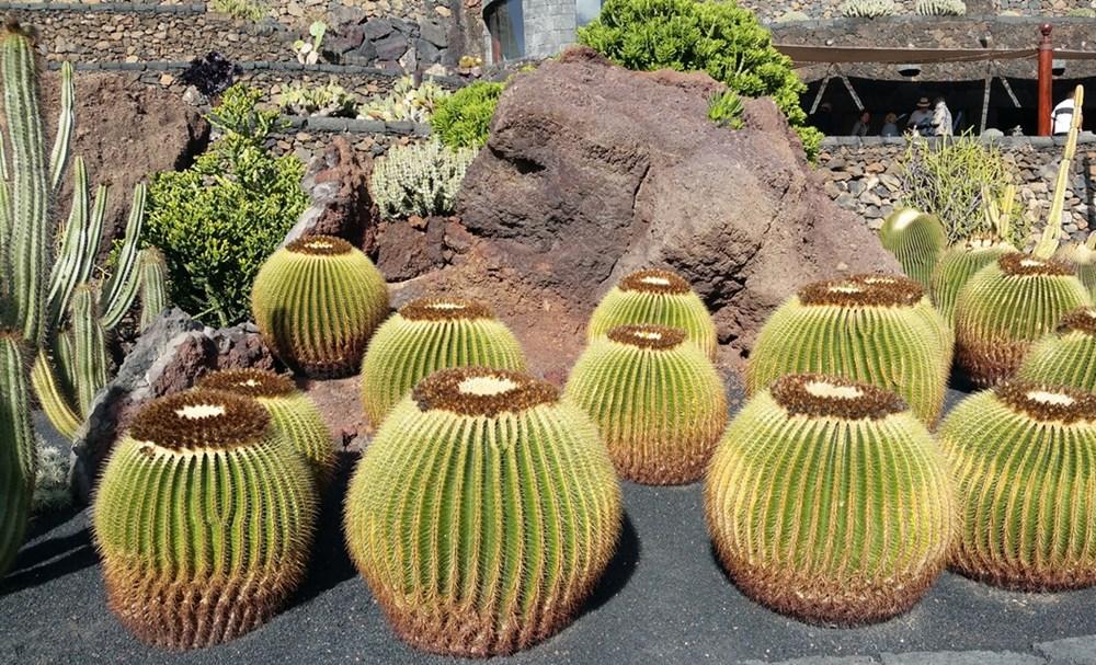 Jardin de Cactus/ Lanzarote