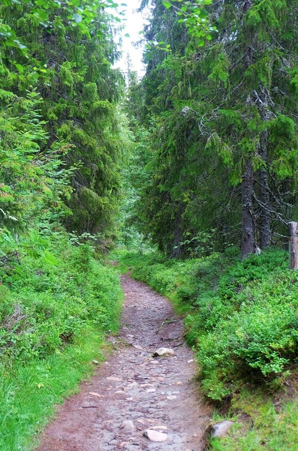 norwegen_wanderweg