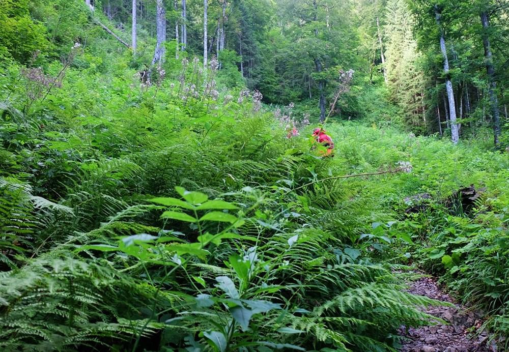 Dschungel Wanderung?