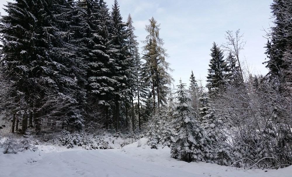 Chiemgauer Wald im ersten Schnee