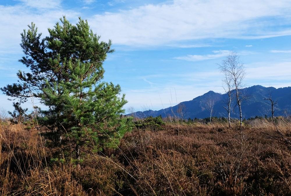 Kleine Wanderungen im Chiemgau (1): Klausenbachklamm und Kendlmühlfilzen
