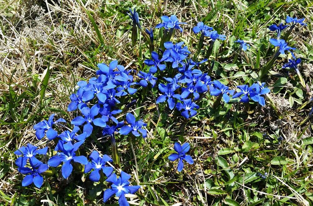 Frühlingsblumen im Chiemgau