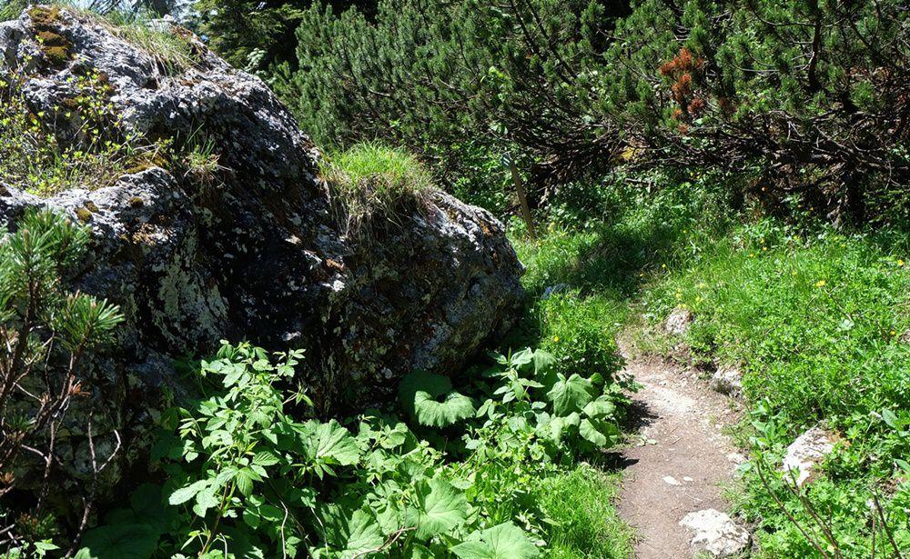 Bäume, Sträucher, Steine, Blumen – Wiesen und Bergwald im Sommer