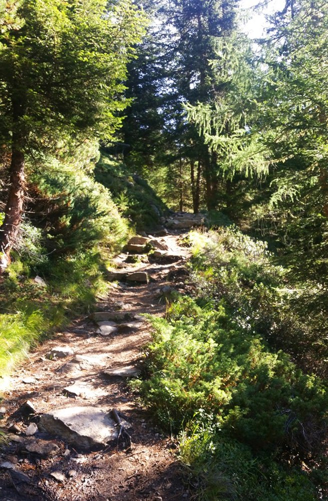 Schattiger Wald auf dem Hüttenzustieg im Sommer, Winnebachseehütte