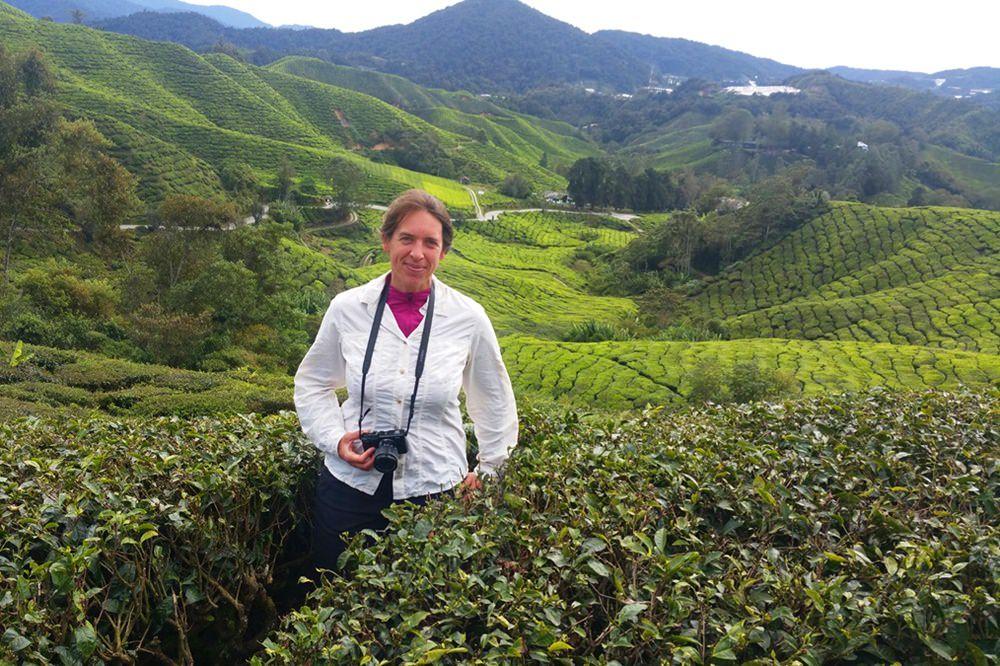 Gipfelglück in den Tee Feldern der Cameron Highlands