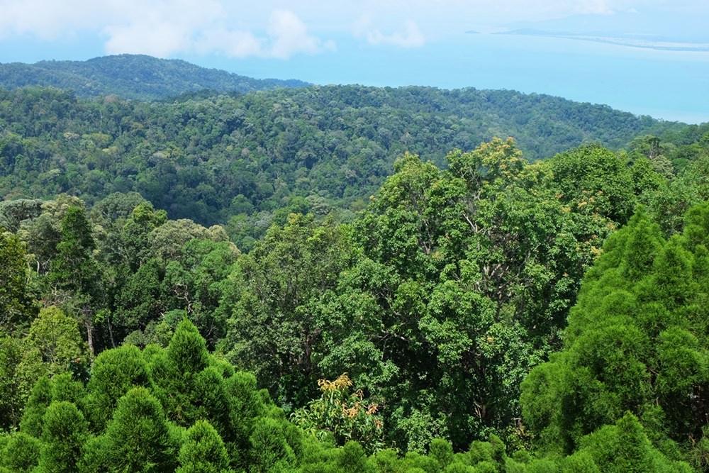 Aussicht auf Dschungel und Meer vom Penang Hill aus | Malaysia