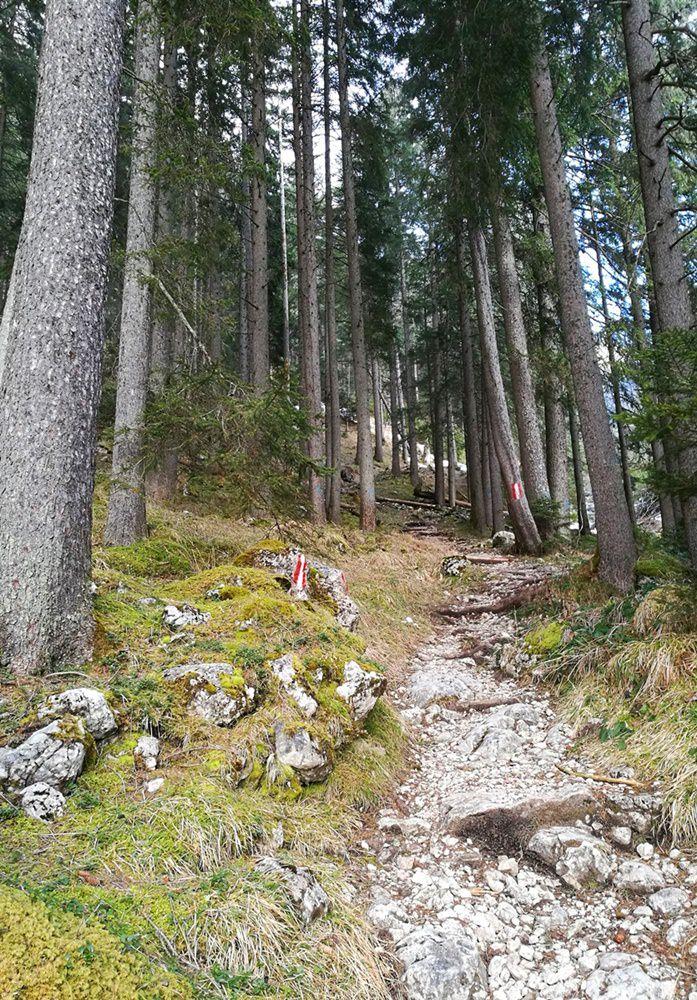 Frühlingshaft: der Steig von Maurach zur Erfurter Hütte
