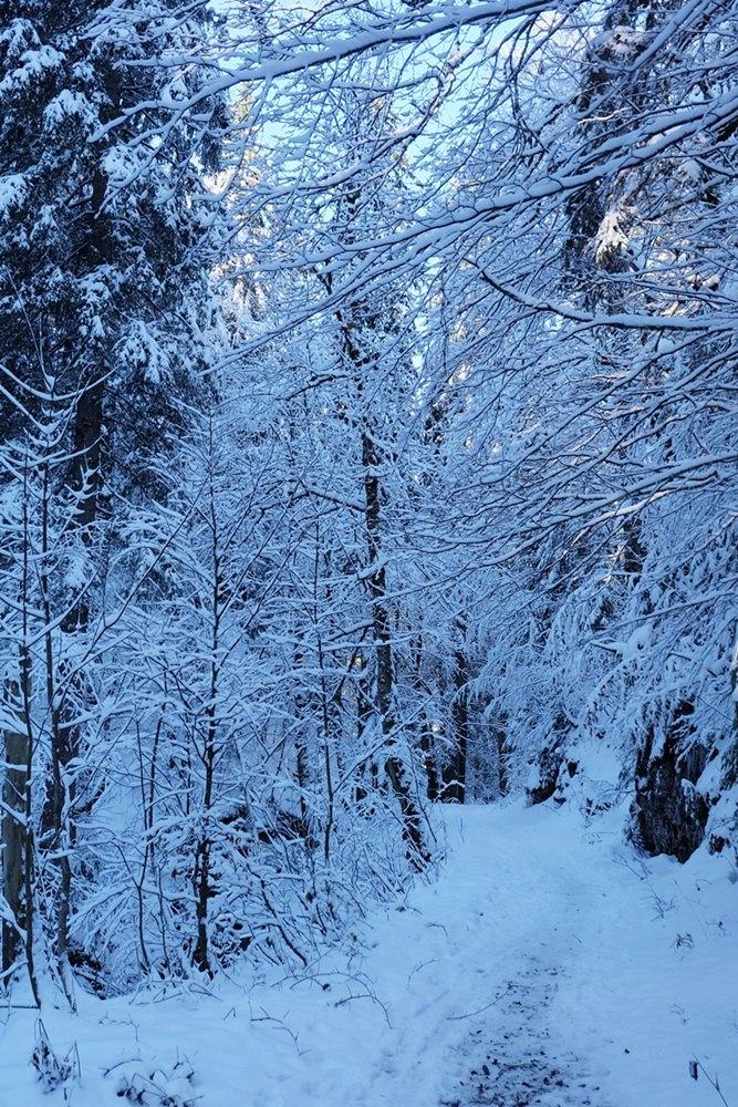 Waldweg zwischen Seegatterl und Dürrnbachhorn im Winter
