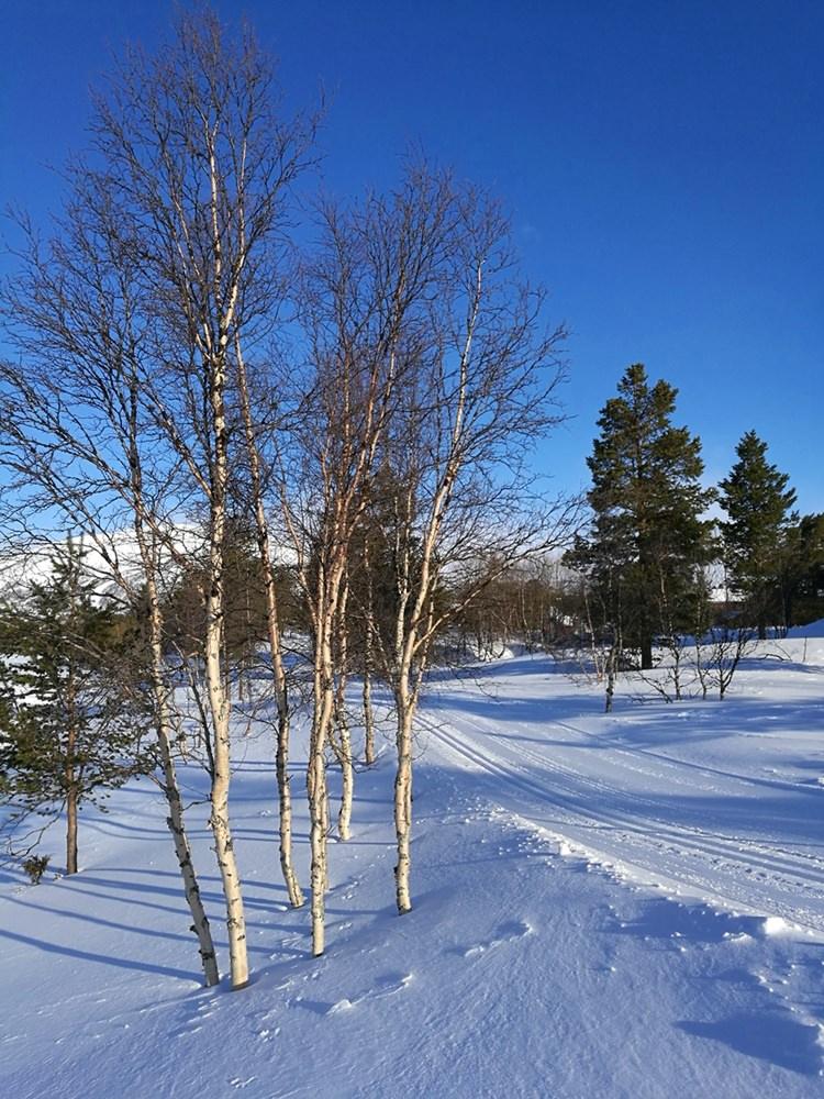 Langlauf Ski als Fortbewegungs-Mittel. Vom Hotel ins Dorf. | Hovden, Norwegen