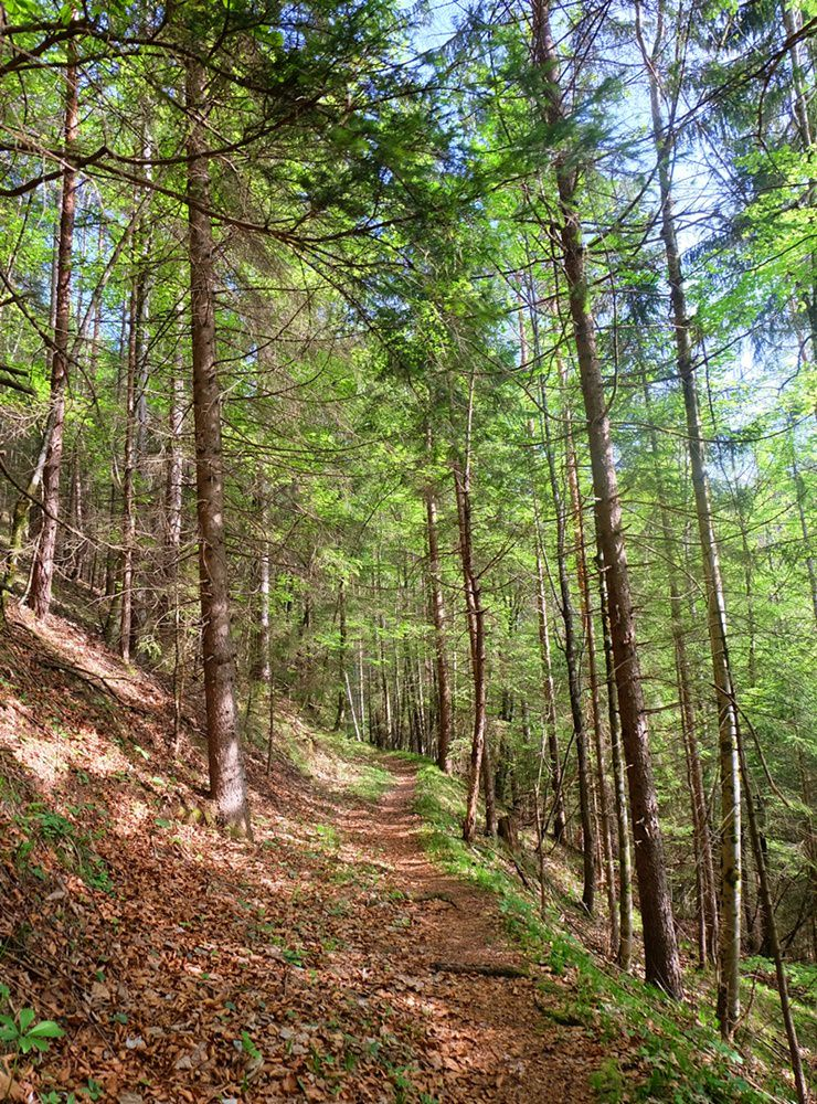 Frühling im Berg-Wald, doch wo liegt noch Schnee und wo ist er weg?