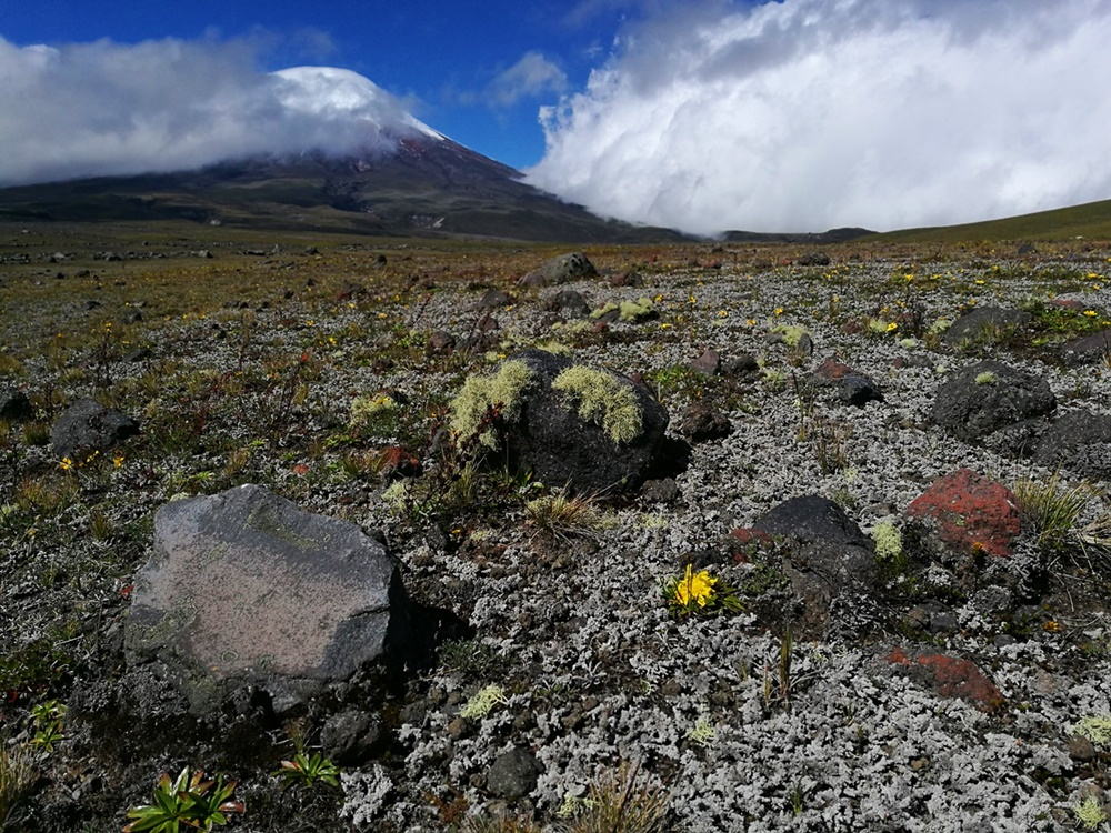 Der Cotopaxi - der höchste aktive Vulkan der Welt, ein wunderschöner Berg, selbst wenn er seinen Gipfel versteckt. Und die Schönheit des Cotopaxi Nationalparks entschädigt dafür, nicht am Gipfel gewesen zu sein. | Ecuador