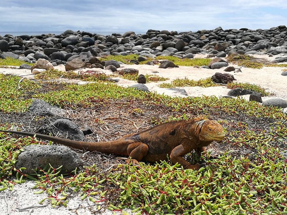 1 mal im Leben... nach Galapagos reisen. Echsen sehen, und Schildkröten, Seelöwen und so viele mehr. | Ecuador
