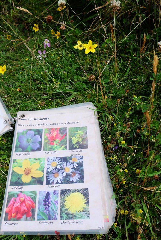 Blumen der Anden bestimmen, mit dem kleinen Handbuch der Hacienda | Ecuador