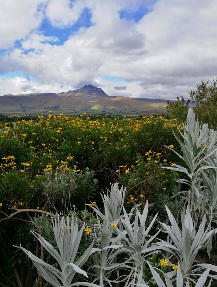 Vulkane am Horizont, Blumen überall | Paramo Hochebene, Ecuador