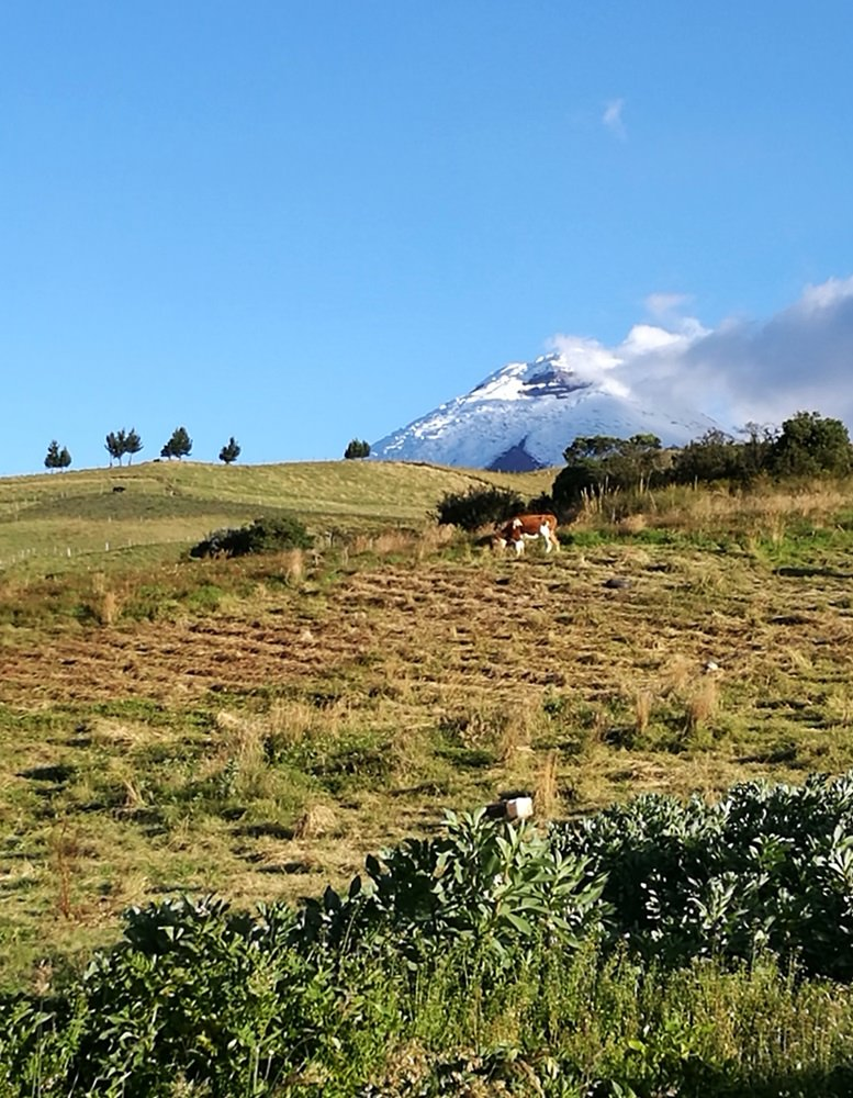 Blick zum Cotopaxi von der Hacienda El Porvenir | Paramo Hochebene, Ecuador