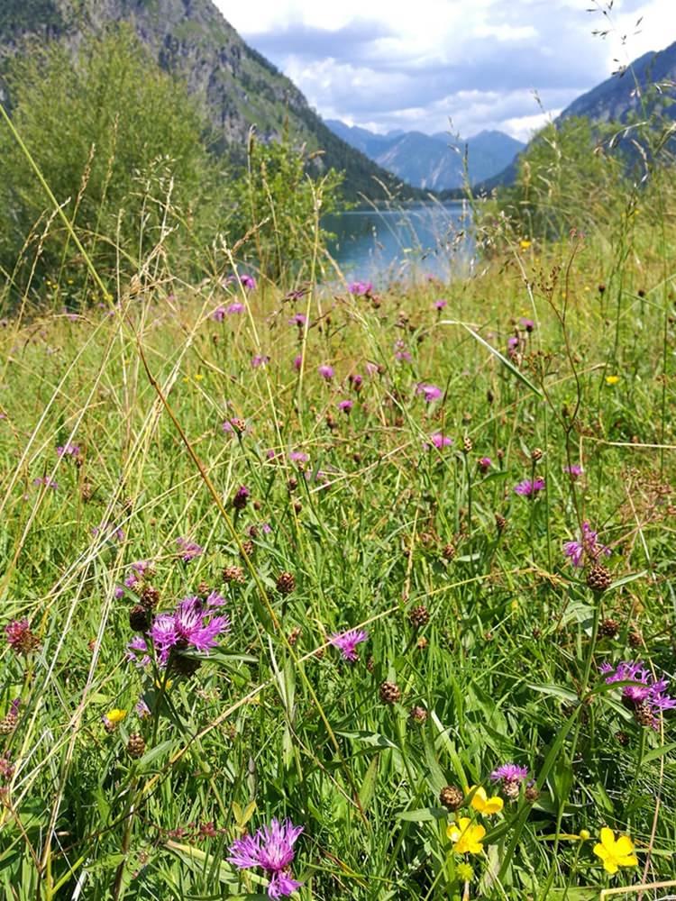 Blumenwiese am Heiterwanger See | mit dem Mountainbike Rund um den Daniel