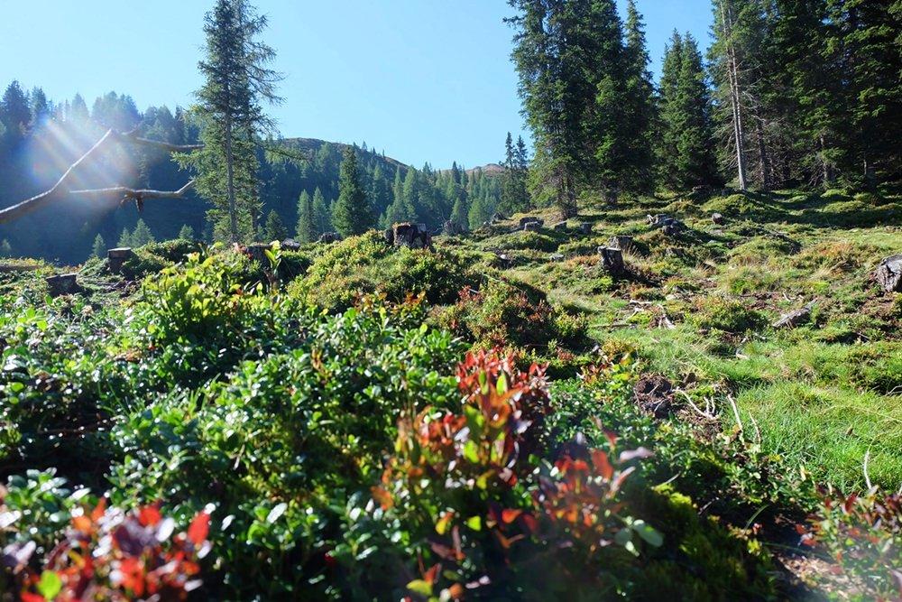Herbstfarben in Südtirol. Oder ist es noch Spätsommer?