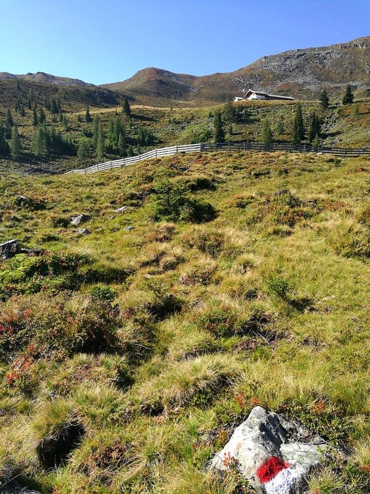 Nach dem schattigen Bergwald kommt die sonnige Almwelt | Ridnauntal, Südtirol